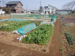 健康農園_信太