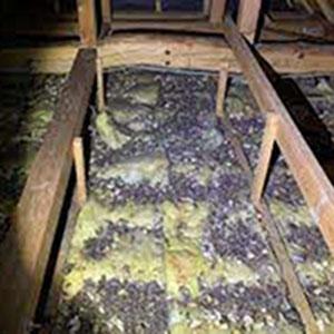 『ハクビシン被害1』の画像