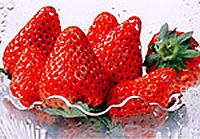 『イチゴ』の画像