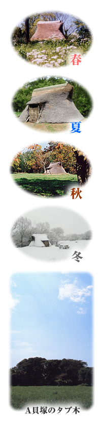 『陸平貝塚公園』の画像