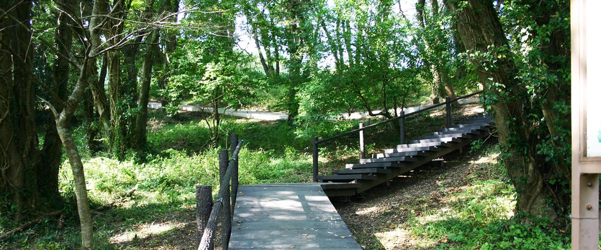 陸平貝塚公園