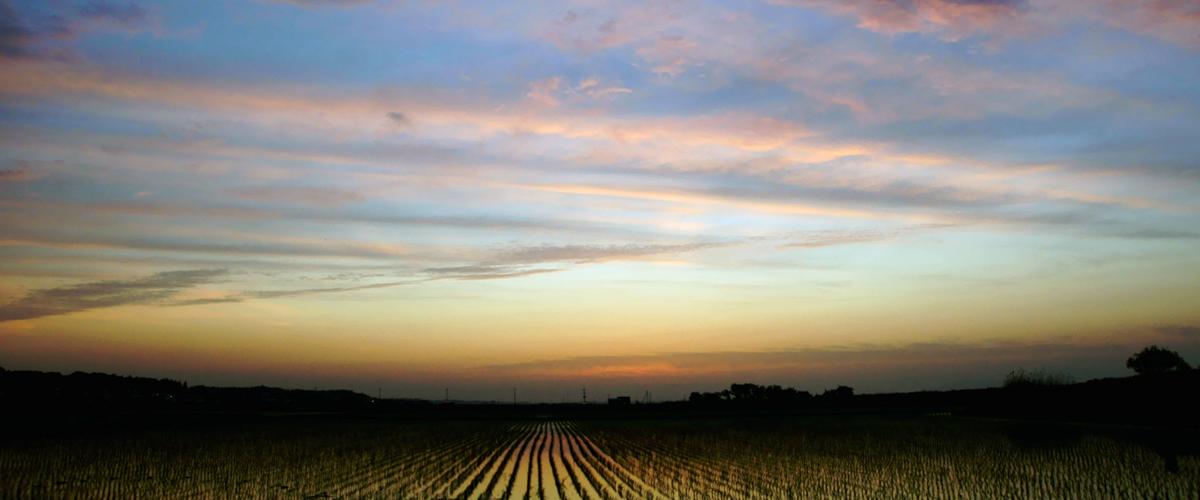 田園の夜明け